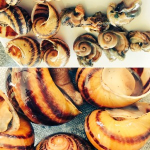Snails - in and out of their shells!